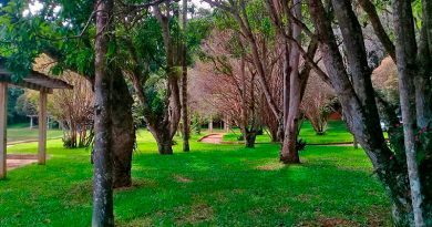 Jardim Botânico UFJF. Foto: Marcos Alfredo