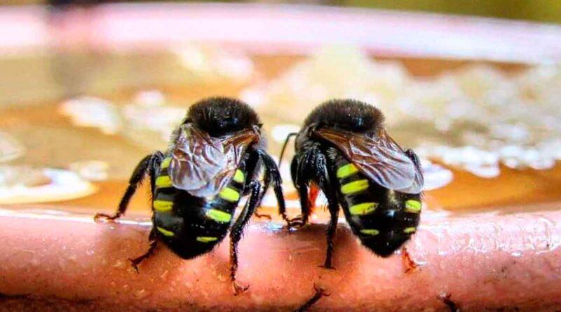-jardim-botanico-ufjf-abelhas